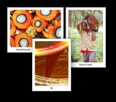 Palm Öl - Ein großer Unbekannter
